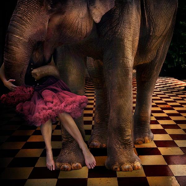Children and Wild Animals by Tom Chambers