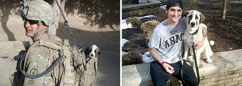 21 Before And After Photos Of Our Furry Friends