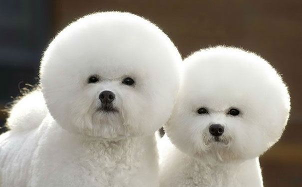 25 Adorable Images of Identical Twin Animals