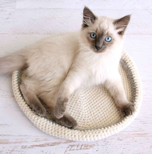 17 Purrfect DIY Projects for Cat Owners