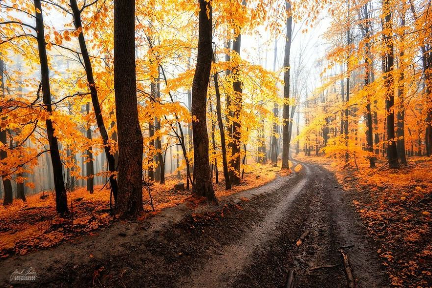 Janek Sedlar Turns Autumn Landscapes into Fairy Tales
