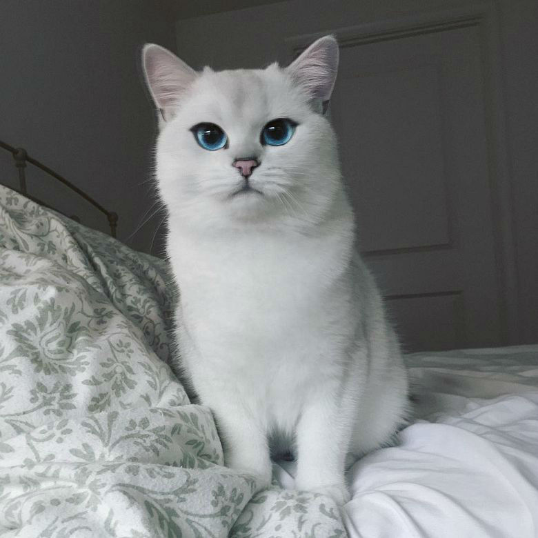 Coby The Cat has the Most Beautiful Eyes in the Universe