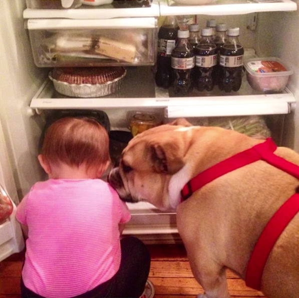 The Adorable Baby Named Erin and Harvey the Bulldog Make an Excellent Team