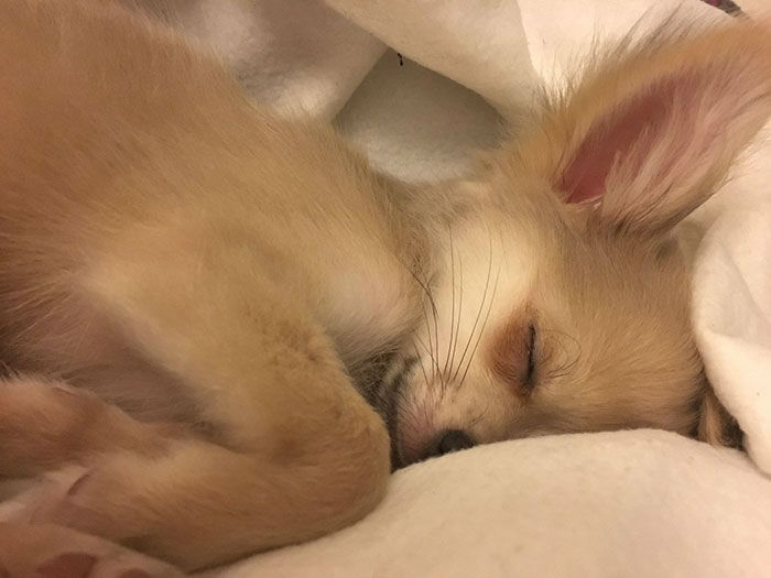 dogs-dream-about-owner007