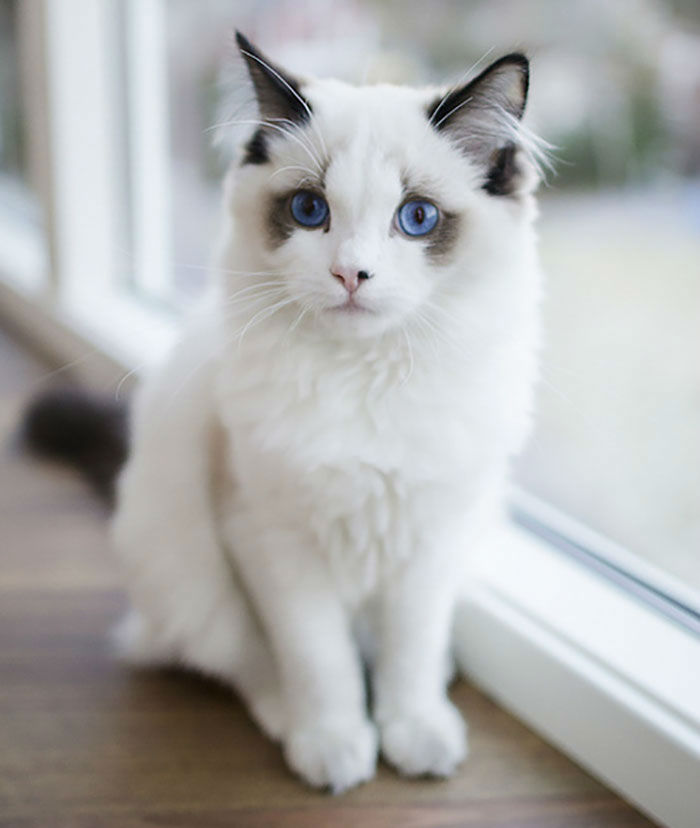 Behold! The 12 Most Beautiful Cats in The World