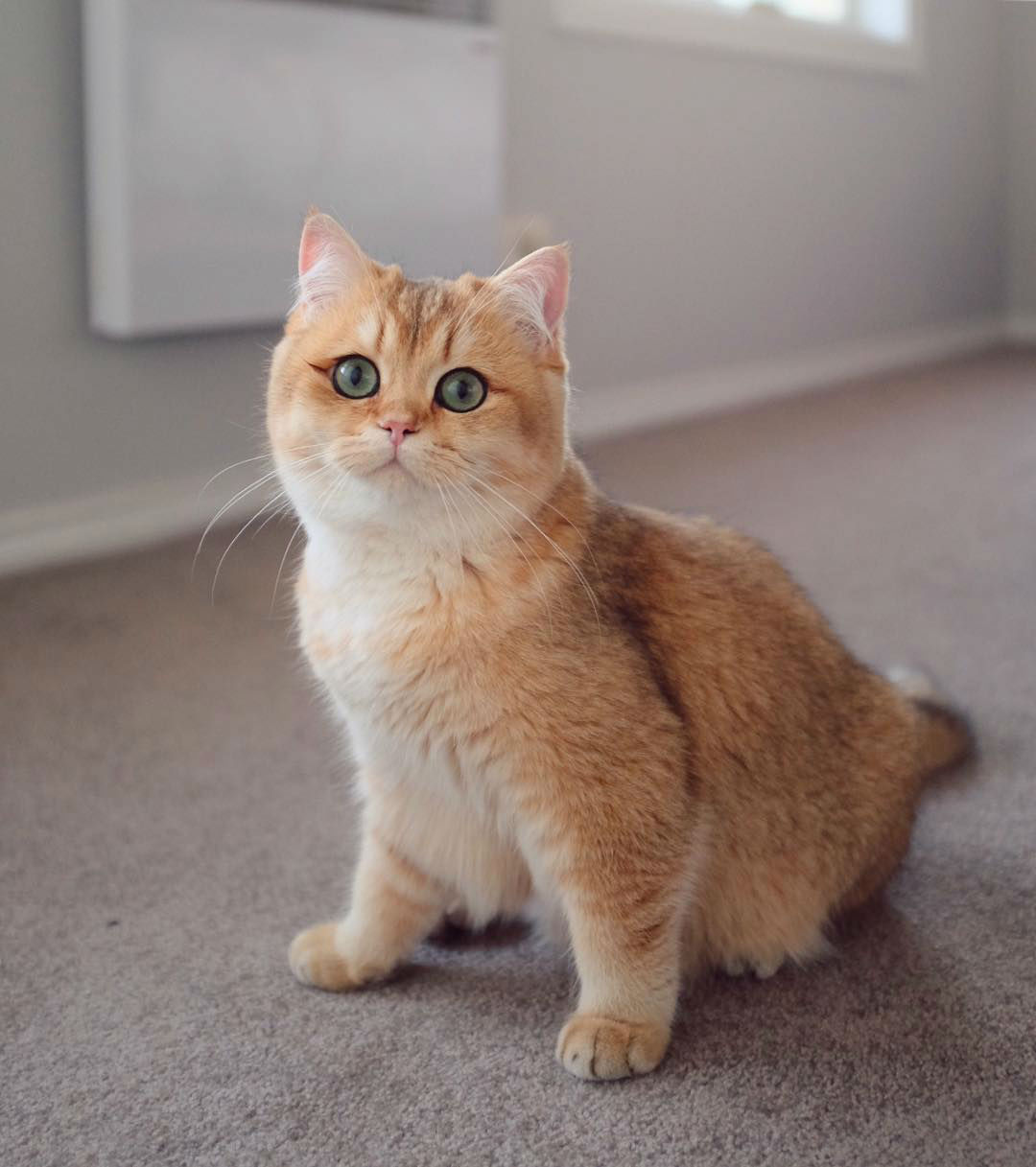 pumpkin-the-cat014
