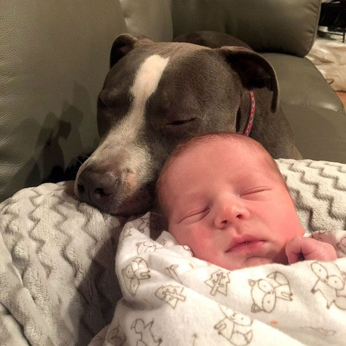 Adorable Family of Pets Takes Good Care of the Little Baby Boy Named Sonny