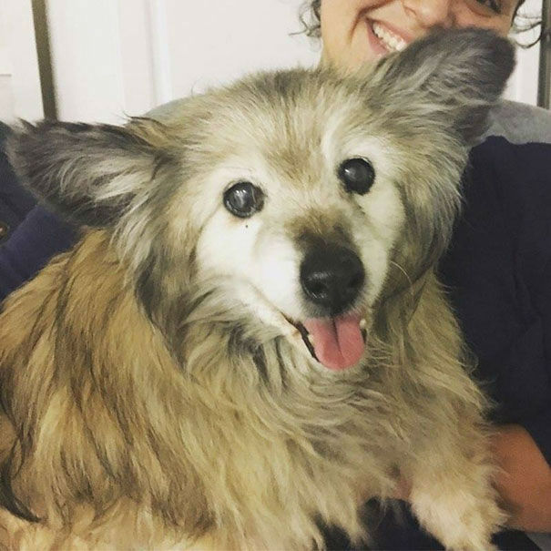 Adorable Senior Dog Named Jaripo was Rescued by a Caring Married Couple