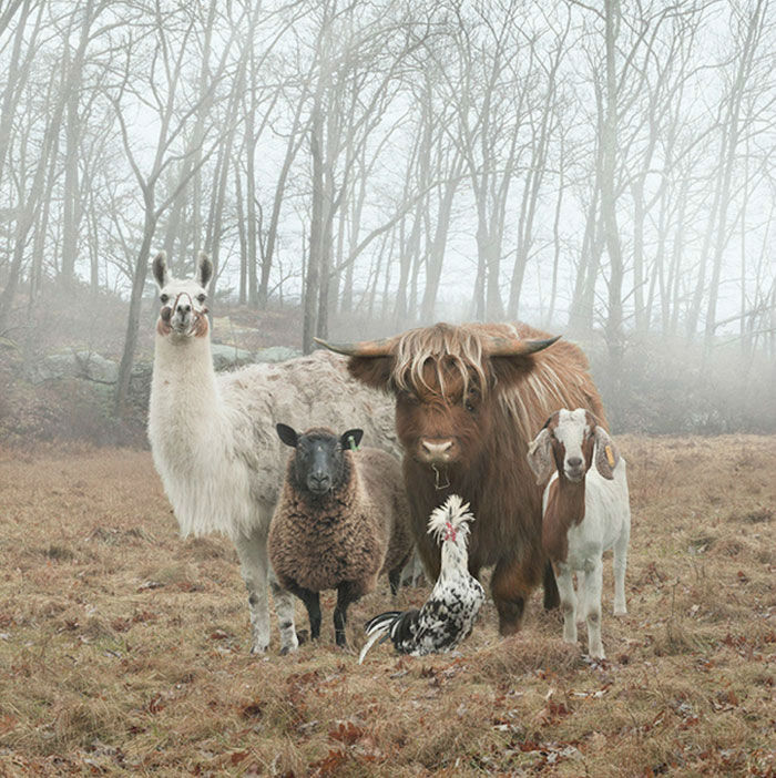 Cool Animals Posing for the Hottest Album Covers