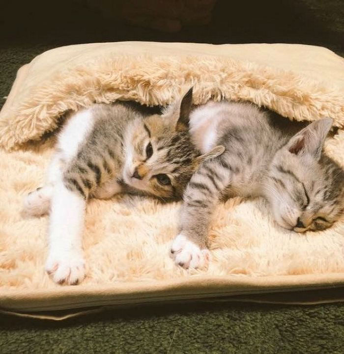 Meet Tora and Saba, the Two Adorable Kittens Who are Hooked on a Foot Warmer