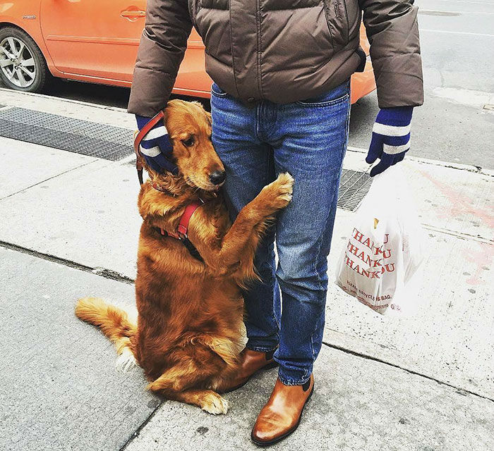 Meet Louboutina, a Golden Retriever Who Loves Hugging Random People
