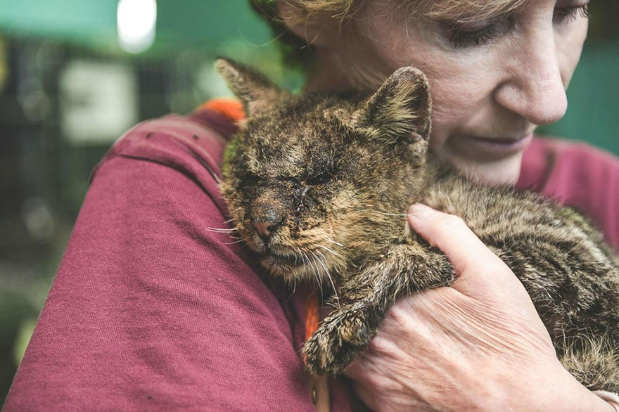 Cat No One Dared to Touch Found a Human Who Hugged Him