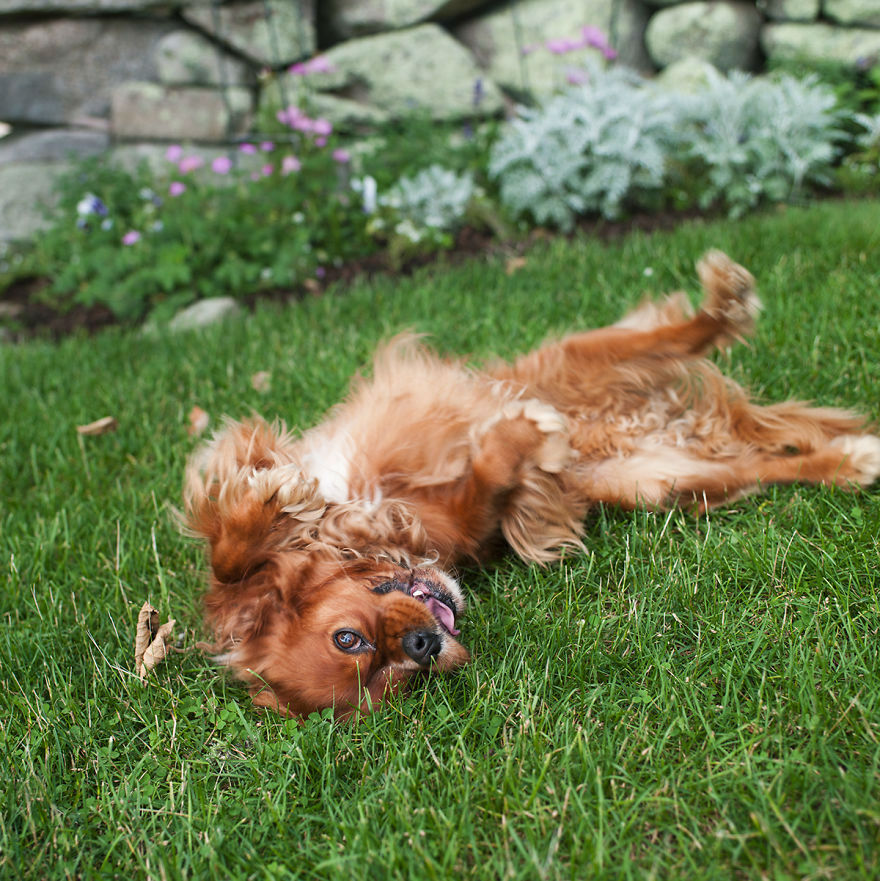 These Dogs Know How to Enjoy Spring