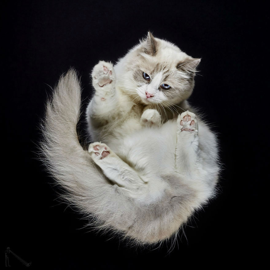 Under Cats: Photo Shoot of Cats from Underneath by Andrius Burba