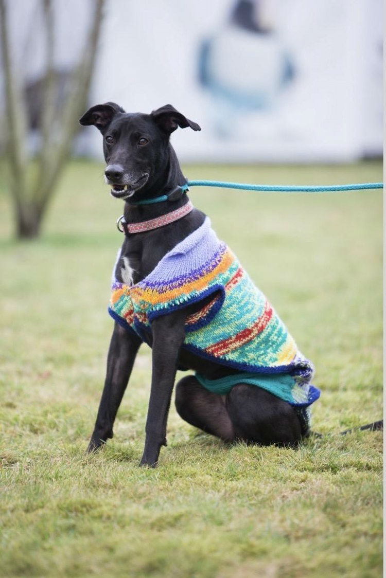 Scottish SPCA is Helping Unfortunate Black Dogs to Find a New Home by Knitting Lovely Colorful Sweaters