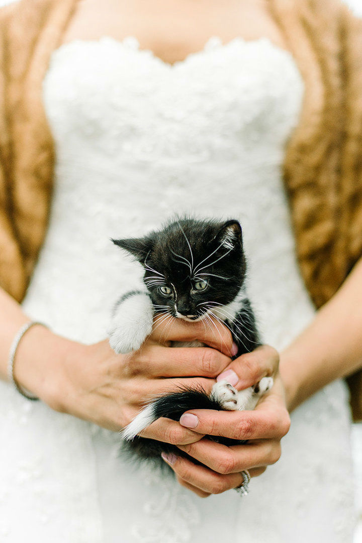 Two Veterinarians and Cat Lovers Had A Purrfect Wedding Ceremony