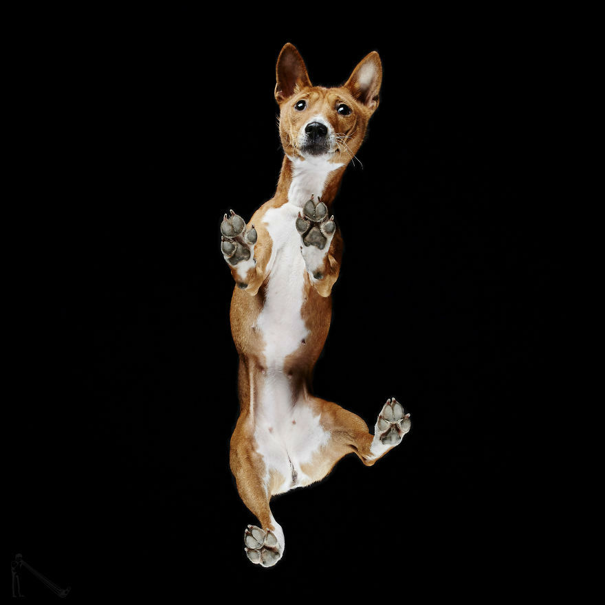 Under Dogs – Funny Photographs Captured From Underneath