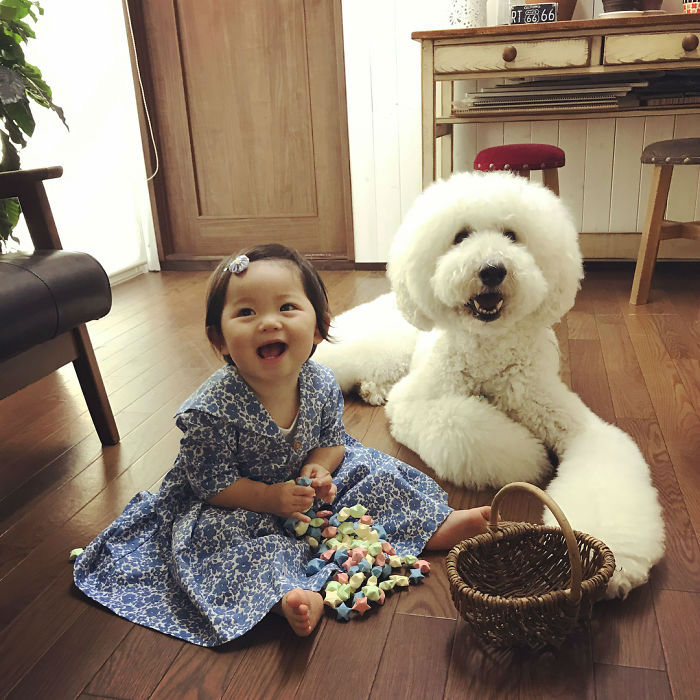 Cuteness Overload   One Year Old Girl and Her Giant Poodle BFF Will Melt Your Heart