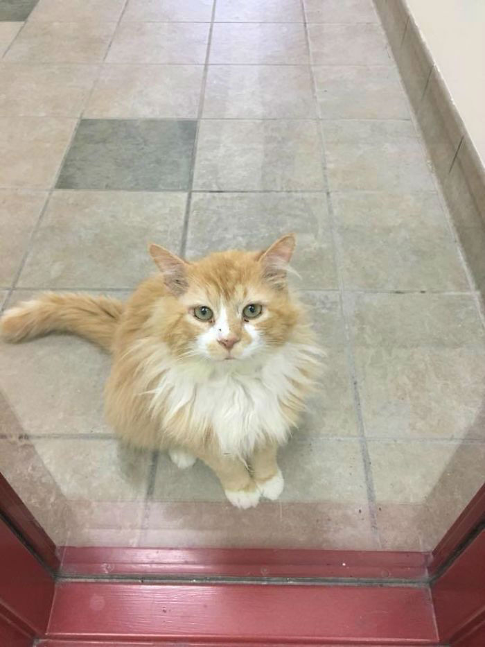 Poor Cat Abandoned by His Family Twice Even After Walking Back Home 12 Miles