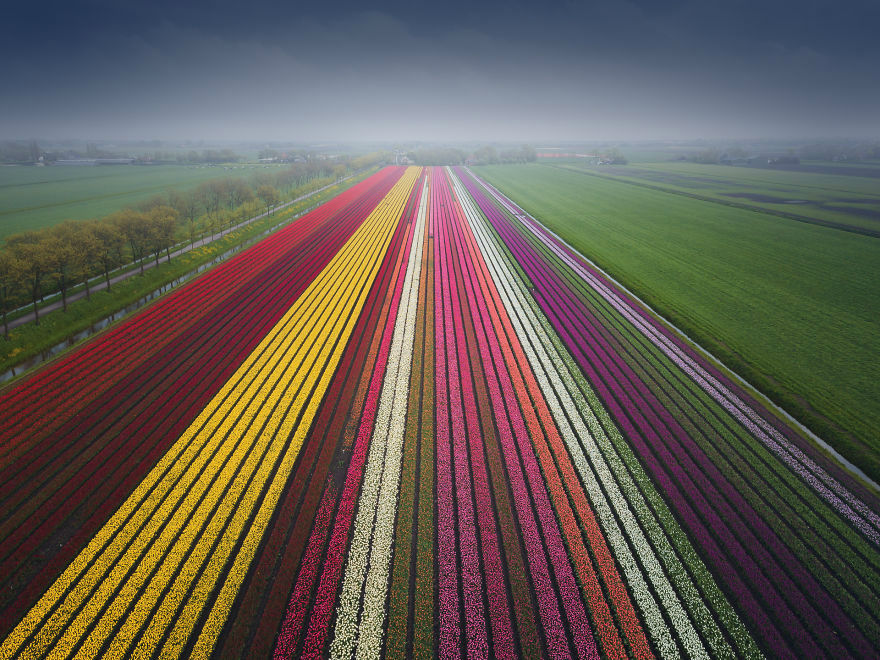 Magnificent Tulip Shots by Albert Dros are the Reason Why We Want to Visit Netherlands