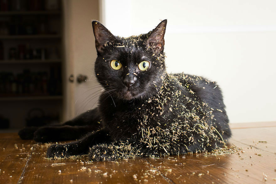 Funny Cats High On Catnip