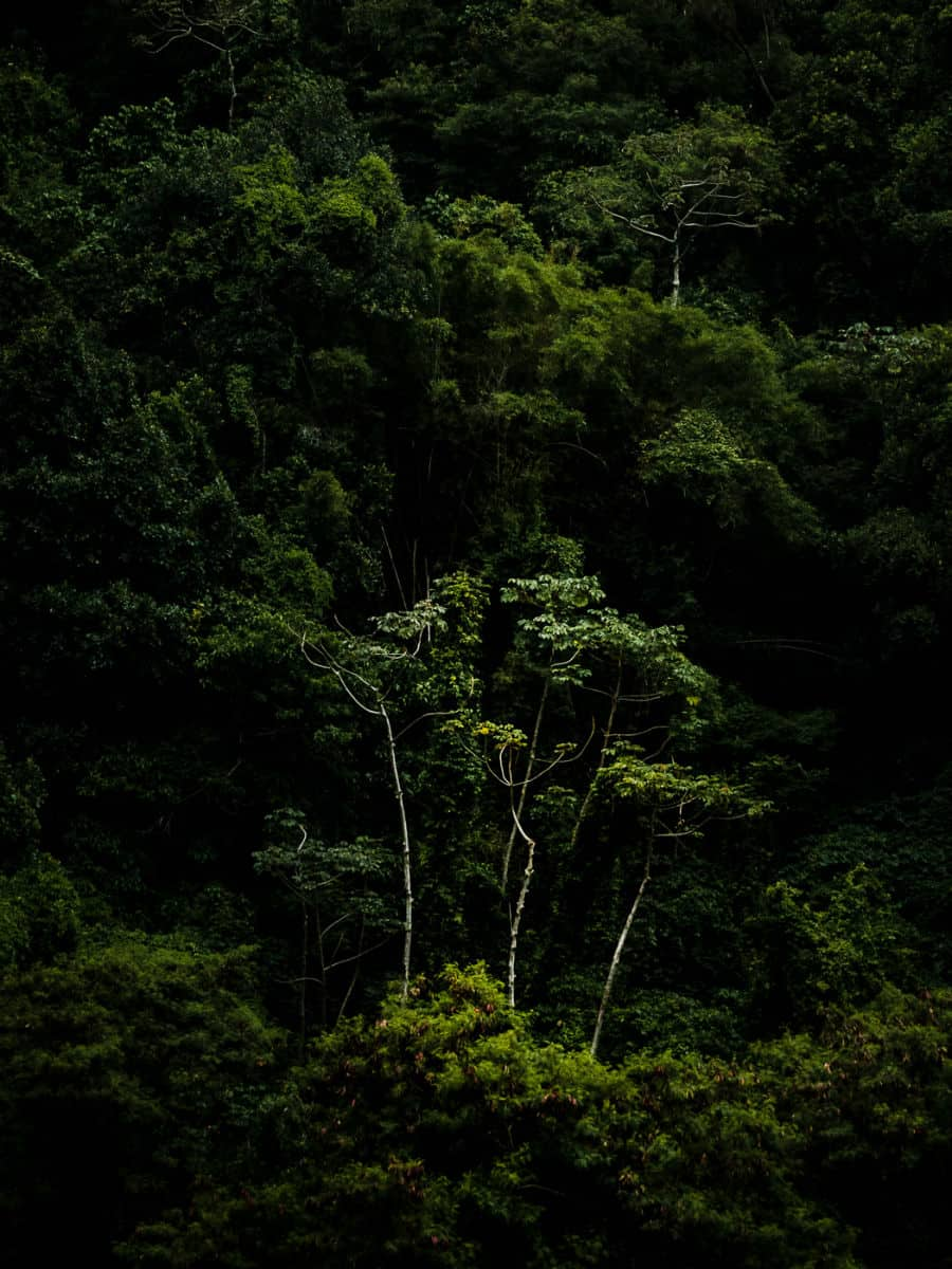 Mystic Forests of Brazil by Uniquely Driven Antonio Schubert
