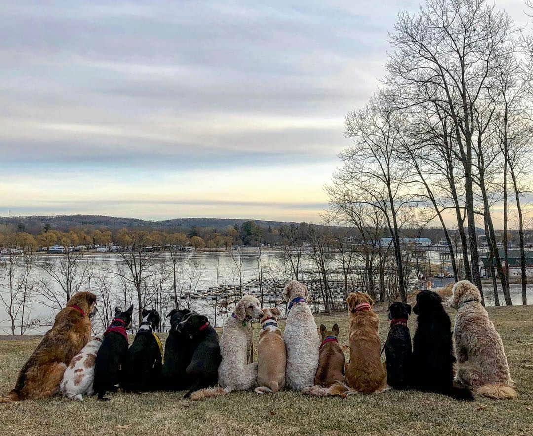 Photos of Dog Pack Buddies on Their Daily Walks