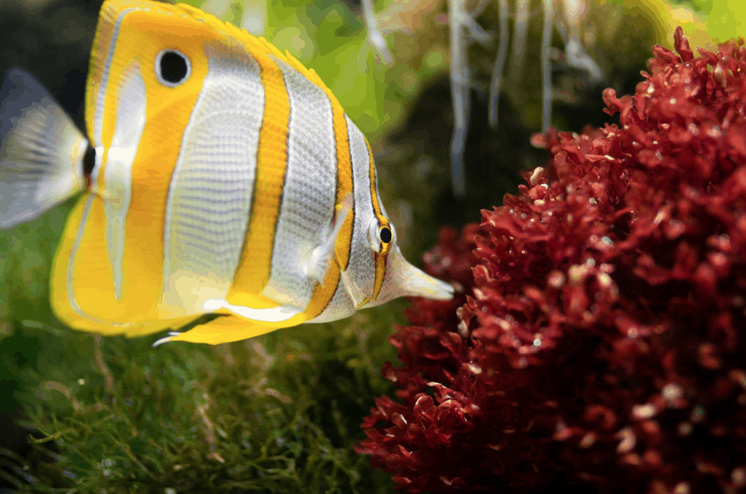 Setting Up A Saltwater Aquarium for Beginners