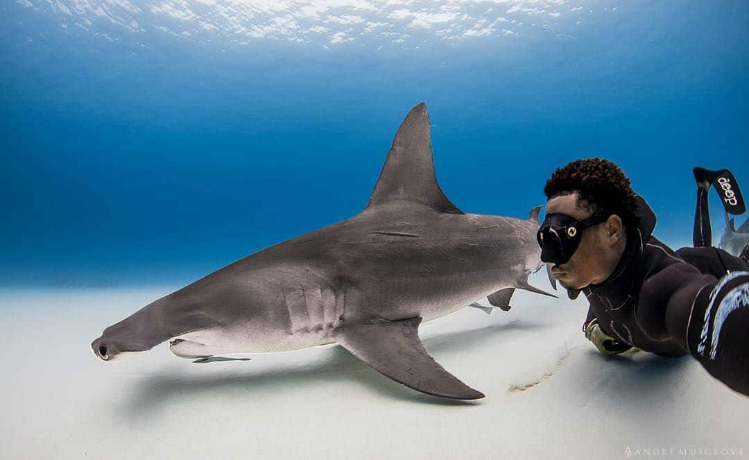Incredible Underwater Photography by Diver/Photographer André Musgrove