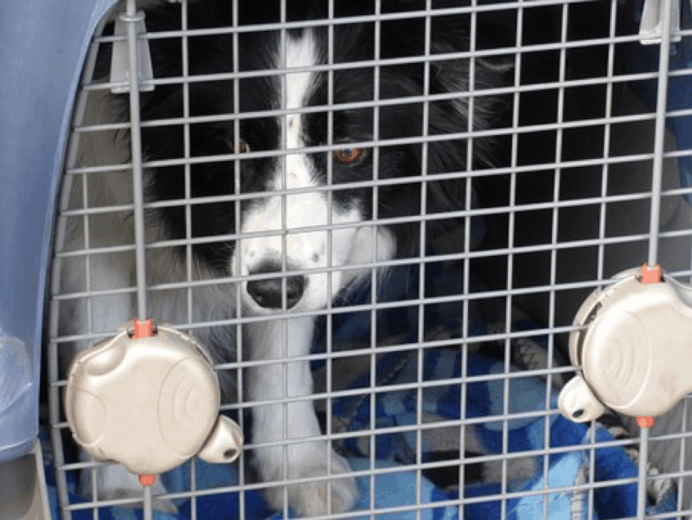 A Heavy Duty Dog Crate Is Worth Some Thought   Heres Why