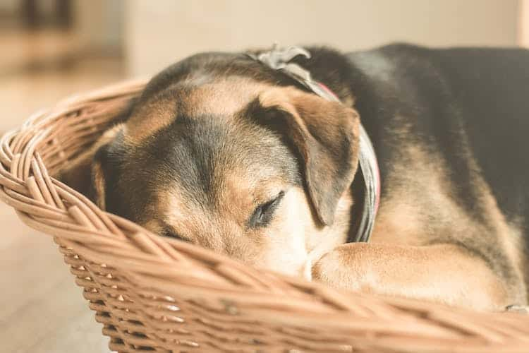 How To Find The Best Dog Beds For Your Four Legged Friends