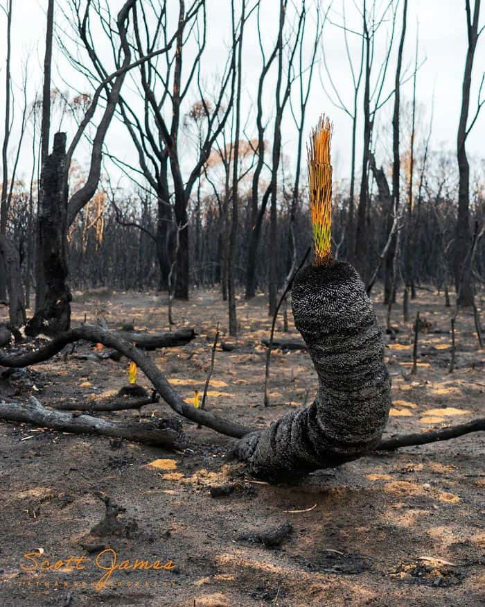 Australia Rises from the Ashes as Green Life Slowly Emerges in the Bushfire Aftermath