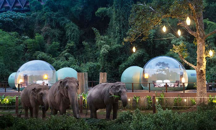 Jungle Bubble   $585 a Night for 2 at Thailand's Elephant Resort