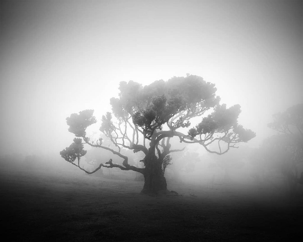 Morning Fog in Portugal and Its Lonely Leafless Trees by Michael Schlegel   [Black and White]