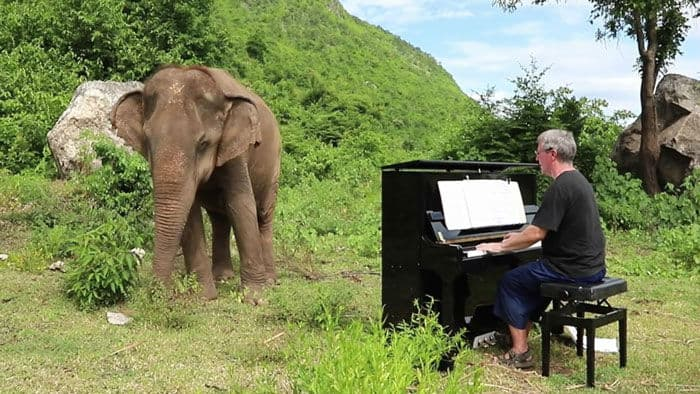 Kind Hearted Pianist Sharing His Talent and Time with the Blind Elephant