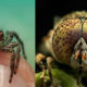 Professional Photographer Turns His Insect Phobia into Masterpiece-Legacy-Career