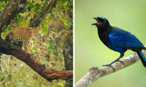 Elusive Animals of India in Supreet Sahoo's Wildlife Photography