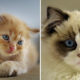 Expert Advice and Tips for First Time Cat Owners