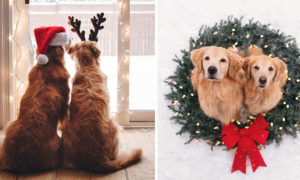 Extremely Adorable Christmas-Themed Photos of Lizzie and Ally