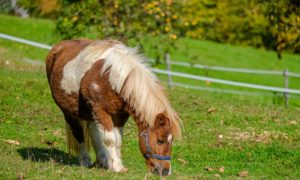 Expert Tips and Advise You Can Use When Rehoming A Pony