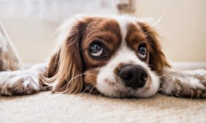 What to Do If You Suspect Your Pet Died Due to Negligence