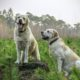 Getting A New Dog? Here Are The Perfect Breeds You Should Take A Look At