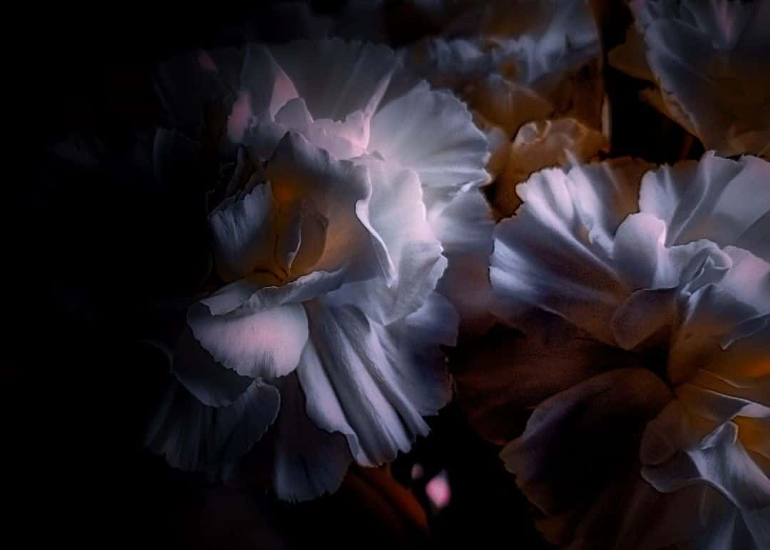 Ethereal And Emotionally Evoking Macro Photography by Shayna Robertson