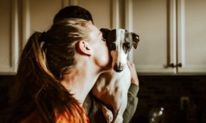 New Dog Parent Guide: 7 Great Tips For Dog Health And Safety