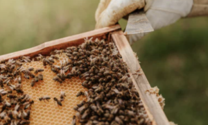 6 Fun Facts On Bees And Why They Are Important